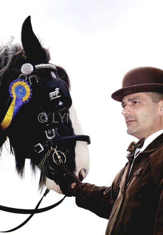 """Joe & Dray horse Horse & Harness Show """"Winner Again"""""""