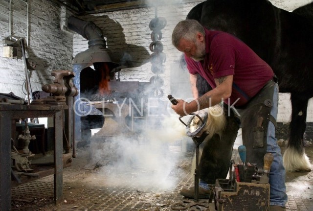 Ian the Farrier Shoeing Horse